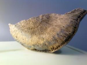 half shell pottery